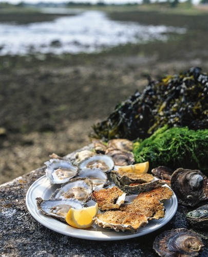 Gratinated oysters (Ireland)