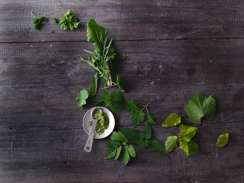 Leafy greens, grasses, wild herbs and leaves for making smoothies