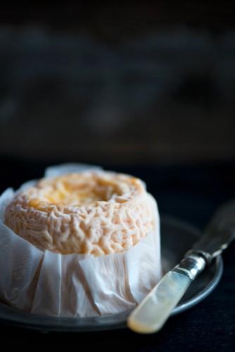 Langres-Käse aus der Region Champagne-Ardenne in Frankreich
