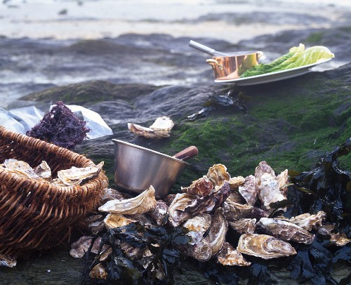 An arrangement of fresh oysters on rocks