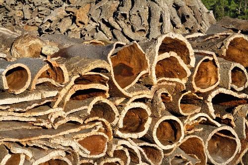 Cork rind, Algarve, Portugal