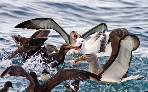 Seabirds feeding