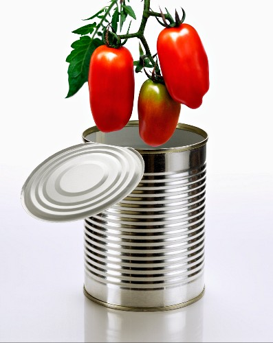 Fresh Marzano tomatoes above a tin can