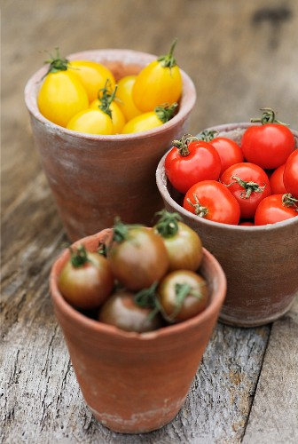 Yellow pear-shaped tomatoes (Yellow Pear), red tomatoes and Black Cherry tomatoes