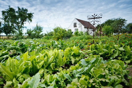 Vegetable bed and a small house