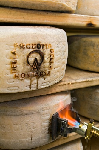 Seal of origin being burned onto a wheel of Asiago cheese