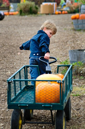 A little boy pulling along a pumpkin in a cart