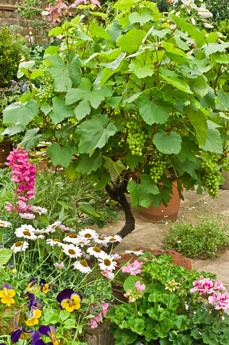 Wine and various flowers in flower pots on a terrace