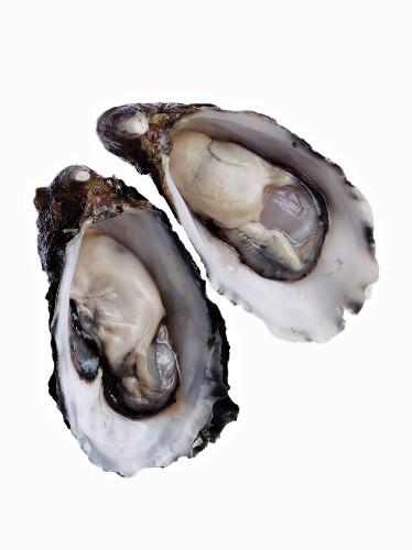 Zwei halbe Austern