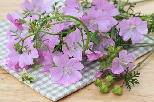 Mallow on a checked table cloth