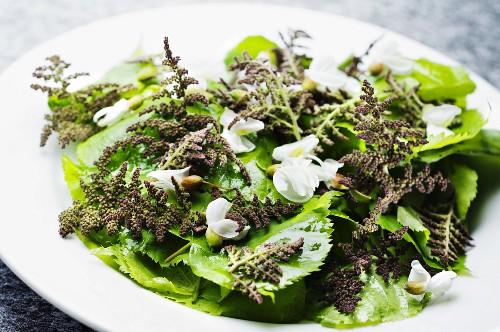 Stinging nettle and lime leaf salad