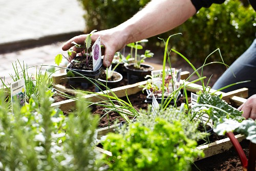 Gardening - Various pots of herbs in a flower bed
