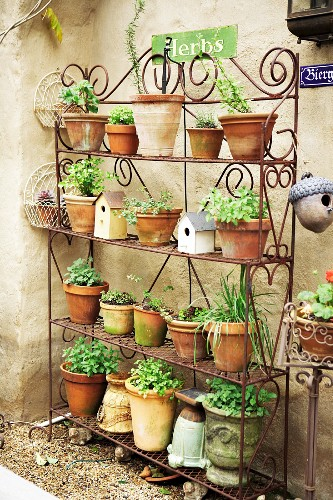 A steel shelf with different herbs