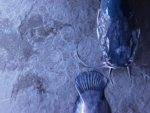 Catfish (head and tail separate)