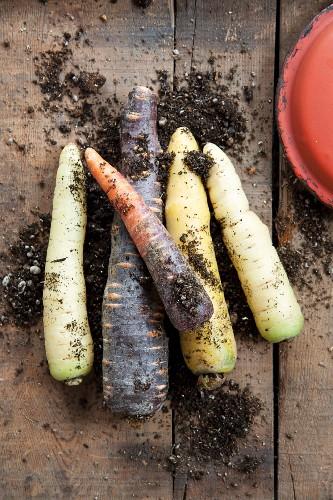 Various varieties of carrots