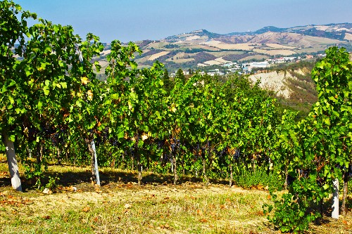 A view from a vineyard in the countryside near Bologna