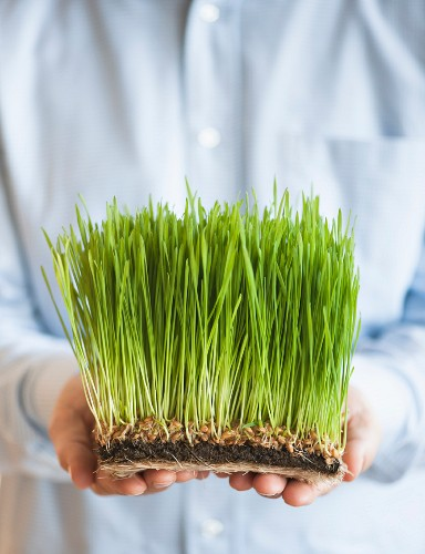 USA, New Jersey, Jersey City, Man holding growing grass in front of him