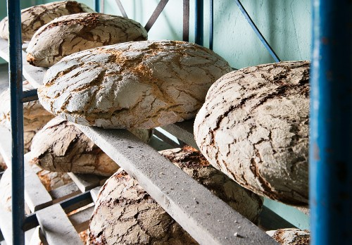 Several loaves of rye bread on wooden shelves in a bakery