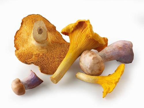 Freshly picked chanterelle mushrooms, hedgehog mushrooms and Pied Bleu mushrooms