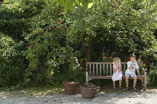 Apfelbaum Familie