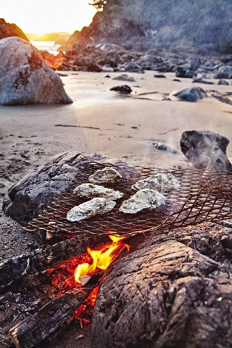 Oysters over a beach fire in Tofino, British Columbia, Canada
