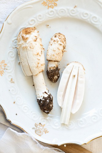 Fresh Shaggy Inkcap (Latin name: Coprinus Comatus) mushrooms, halved and whole wih soil on a porcelain plate