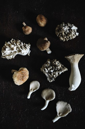 Various edible mushrooms on a black background (top view)