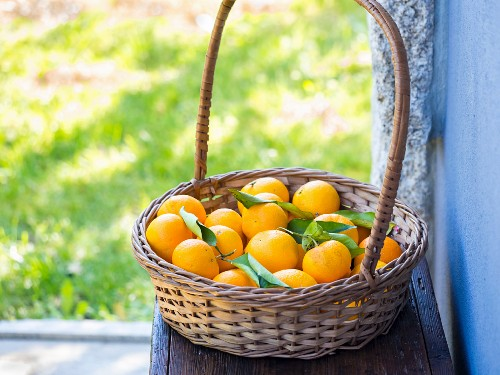 A basket of Portuguese oranges on a bench outdoors