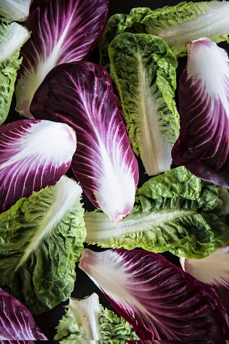 Various lettuce leaves (full image)
