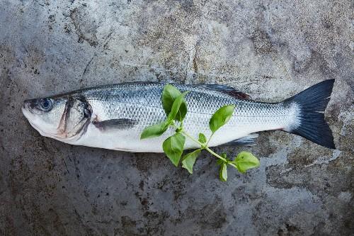 Fresh sea bass with basil