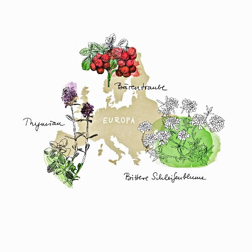 Medicinal herbs from Europe