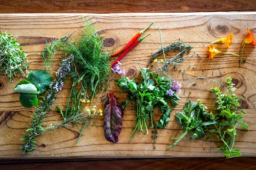 Various fresh herbs with chili peppers on a wooden board