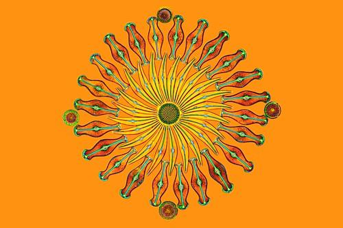 Assorted diatoms, light micrograph