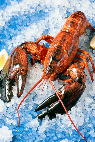 A whole cooked lobster on ice
