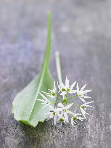 Fresh wild garlic with a leaf and flower