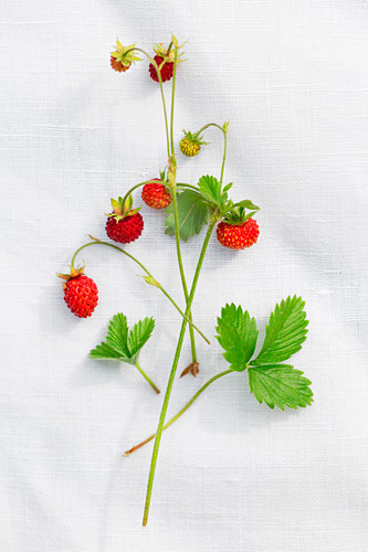 Wild strawberries and leaves on a piece of linen