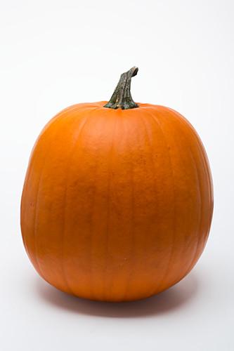 Großer Halloweenkürbis vor Weiss