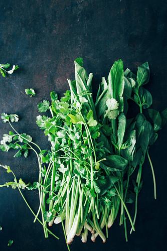 Frisches Koriandergrün und Thaibasilikum
