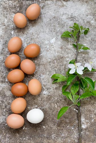 Fresh hens' eggs