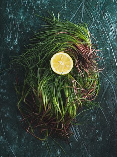 Raw agretti (barba di frate, Salsola soda) over green background to be cooked with lemon juice