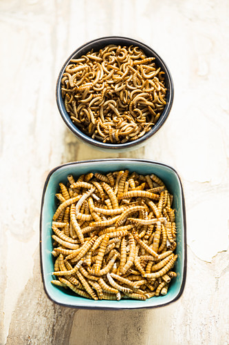 Edible mealworms and buffalo worms in bowls (freeze dried)