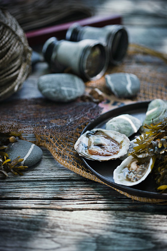 Freshly opened oysters with seaweed on a plate with a fishing net