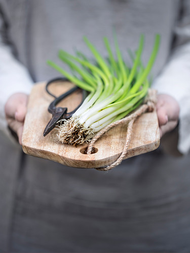 Fresh spring onions on a chopping board