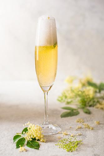 Glass of homemade elderflower champagne with fresh elderflowers