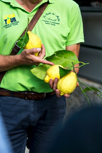 A tour of a lemon grove, Aceto, Amalfi coast, Italy