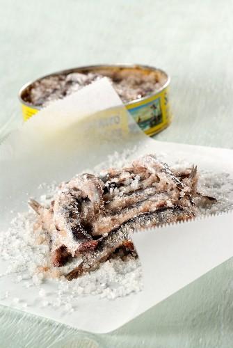 In Salz eingelegte Sardinen auf weißem Pergamentpapier