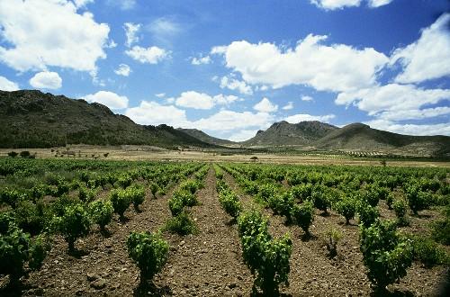 Jumilla wine-growing region, Spain, home of Monastrell grape