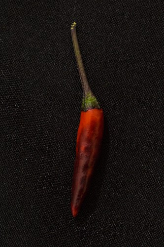 A Maui Purple chilli pepper