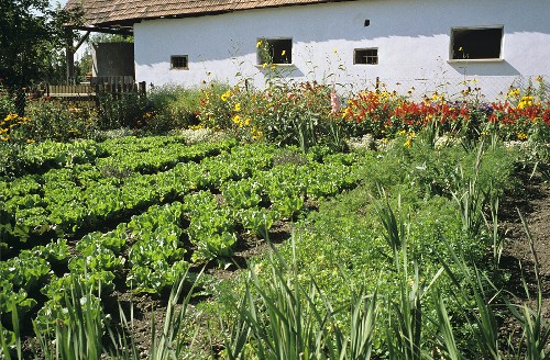 A country vegetable garden with flowerbeds in front of an outhouse