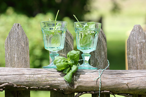 Basil wine for detoxification